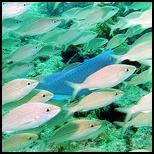 Retirement and Fishing-Florida Keys