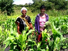 volunteering in Zambia when retired, Headwoman farming