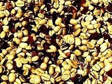 Retire in Boquete, Panama, Panamanian coffee