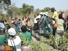 volunteering in Zambia when retired, Irrigation pumps arrive
