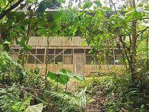 Retirement and volunteering in the Ecuadorean Amazon